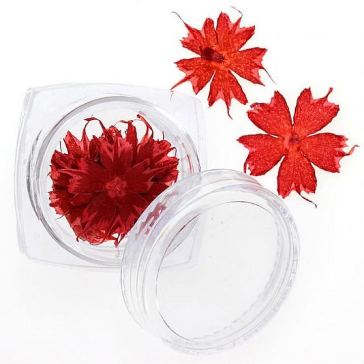 Сухоцветы для украшения и дизайна ногтей №100