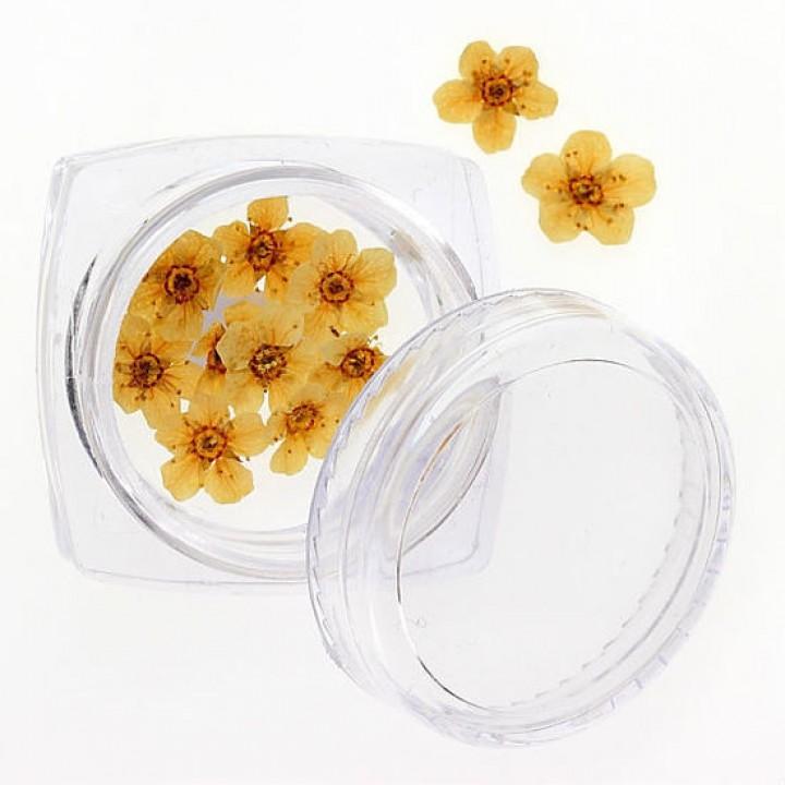 Сухоцветы для украшения и дизайна ногтей №105