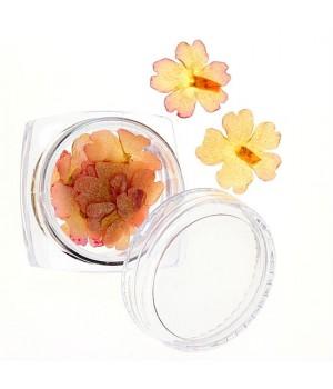 Сухоцветы для ногтей №25