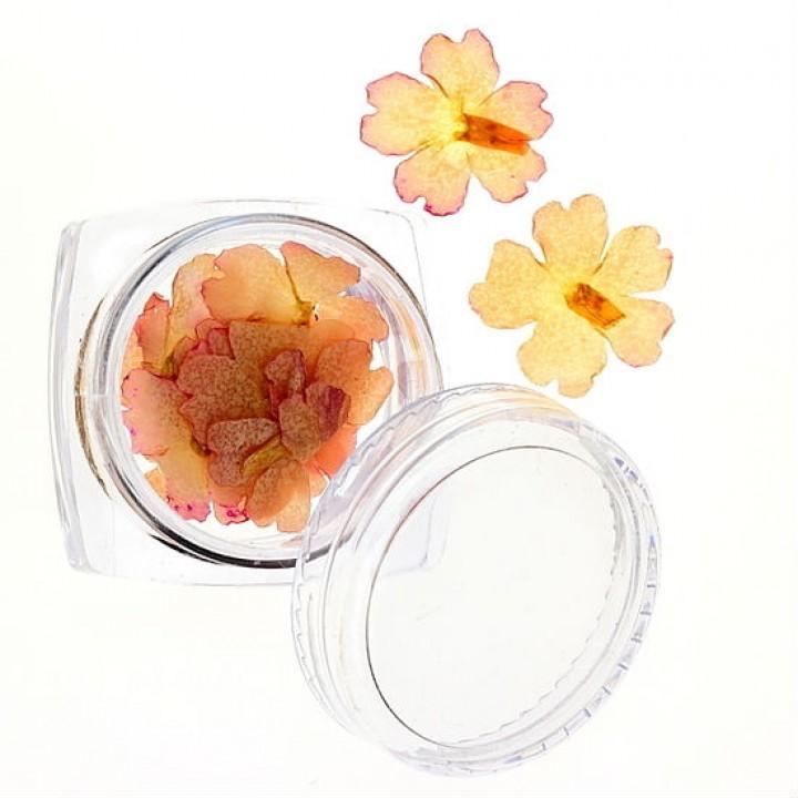 Сухоцветы для украшения и дизайна ногтей №25