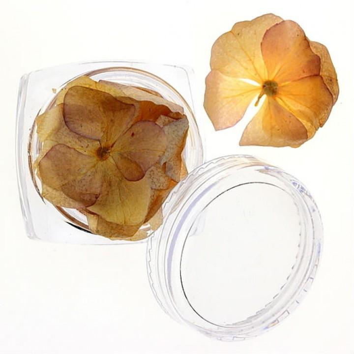 Сухоцветы для украшения и дизайна ногтей №26