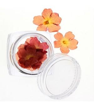 Сухоцветы для ногтей №29