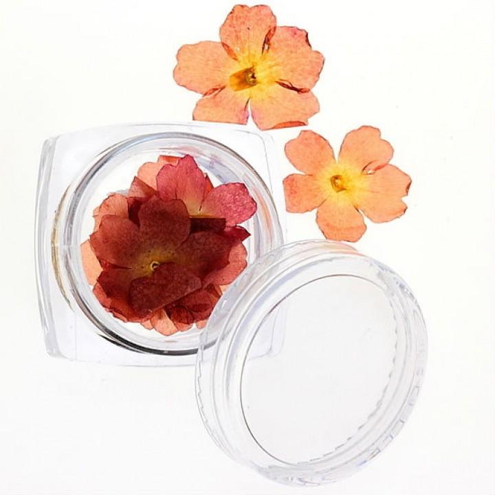 Сухоцветы для украшения и дизайна ногтей №29