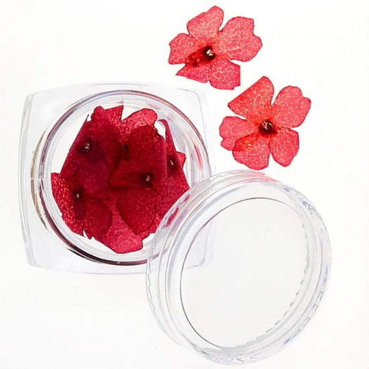Сухоцветы для украшения и дизайна ногтей №30