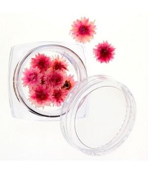 Сухоцветы для ногтей №31