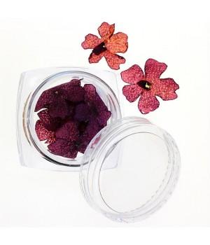 Сухоцветы для ногтей №33