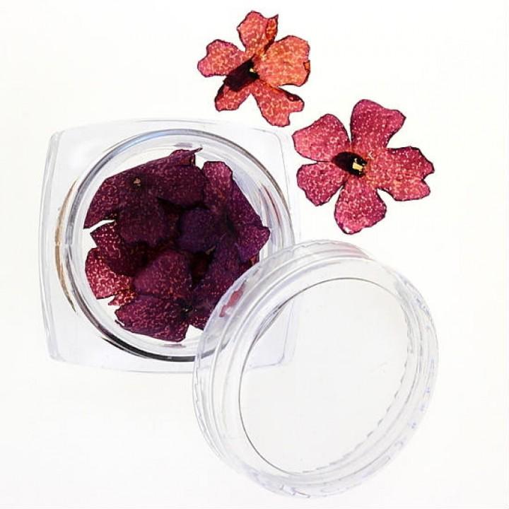 Сухоцветы для украшения и дизайна ногтей №33
