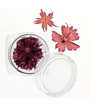Сухоцветы для ногтей №35