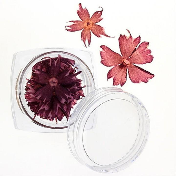 Сухоцветы для украшения и дизайна ногтей №35