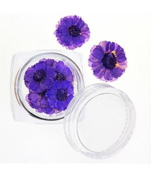 Сухоцветы для ногтей №36