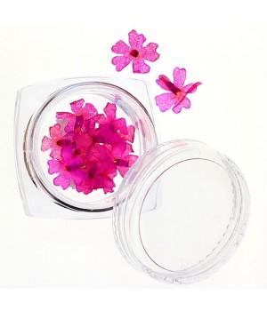 Сухоцветы для ногтей №37