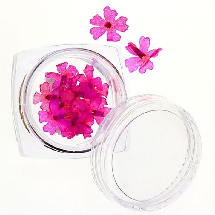 Сухоцветы для украшения и дизайна ногтей №37