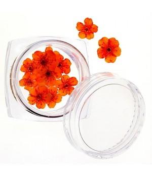 Сухоцветы для ногтей №38