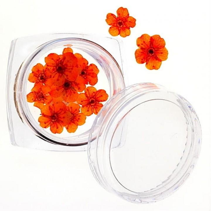 Сухоцветы для украшения и дизайна ногтей №38