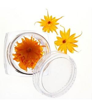 Сухоцветы для ногтей №41