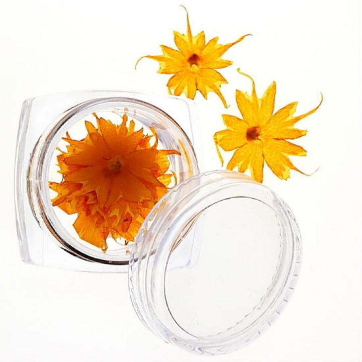 Сухоцветы для украшения и дизайна ногтей №41