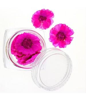 Сухоцветы для ногтей №42