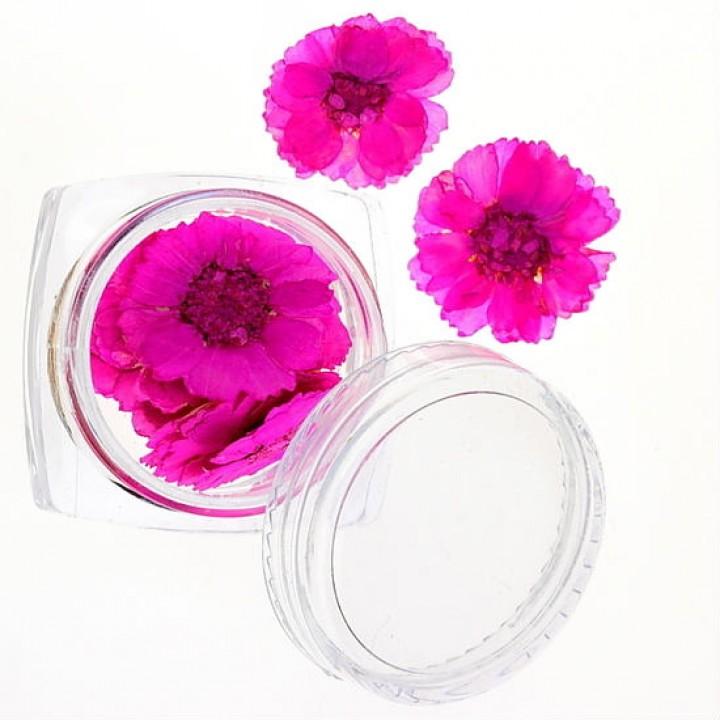 Сухоцветы для украшения и дизайна ногтей №42
