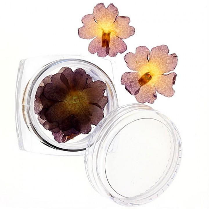 Сухоцветы для украшения и дизайна ногтей №45