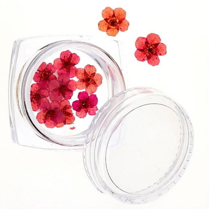 Сухоцветы для украшения и дизайна ногтей №47