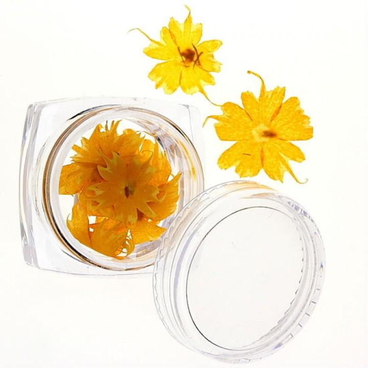 Сухоцветы для украшения и дизайна ногтей №48