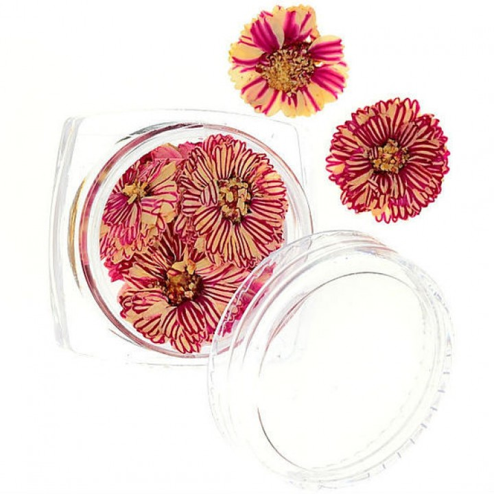 Сухоцветы для украшения и дизайна ногтей №54