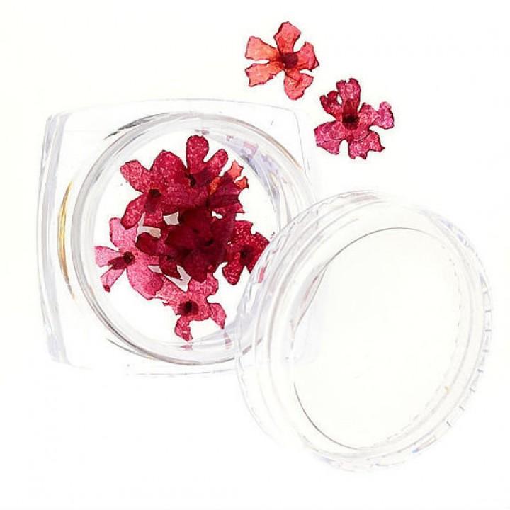 Сухоцветы для украшения и дизайна ногтей №55