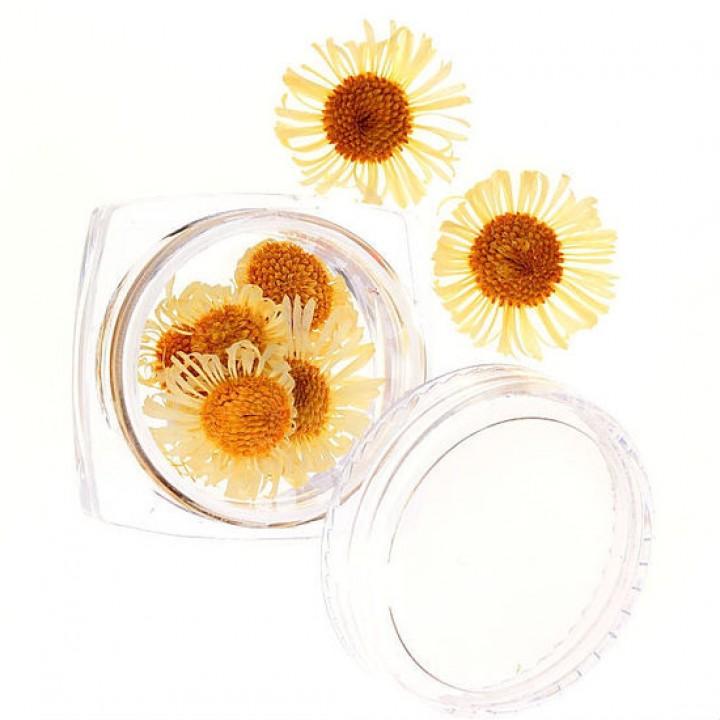 Сухоцветы для украшения и дизайна ногтей №57