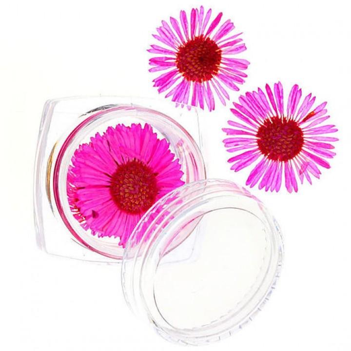 Сухоцветы для украшения и дизайна ногтей №58