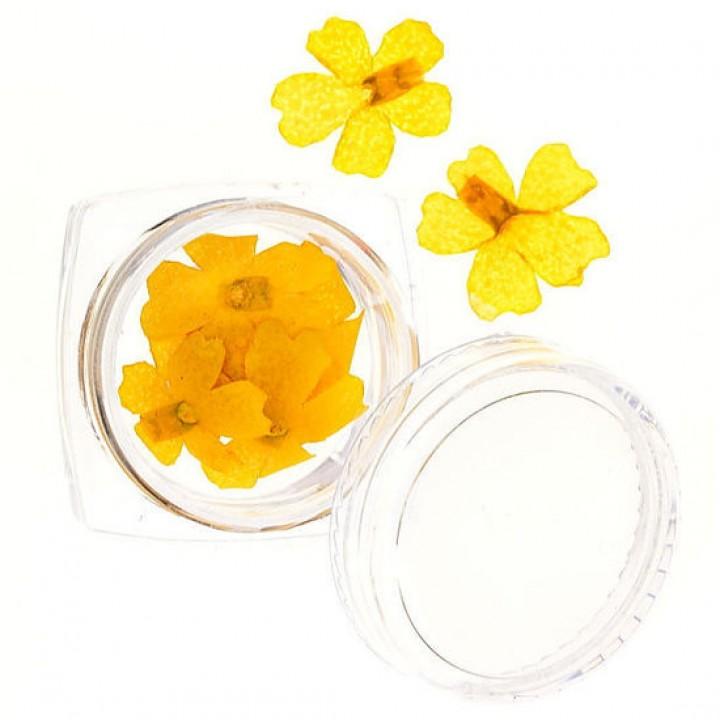 Сухоцветы для украшения и дизайна ногтей №61