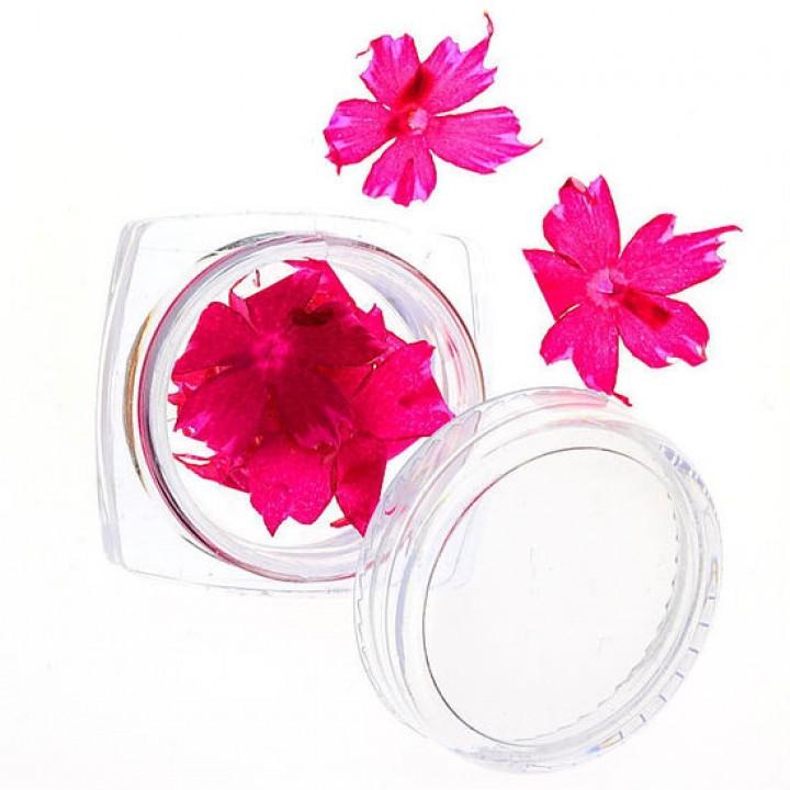 Сухоцветы для украшения и дизайна ногтей №62