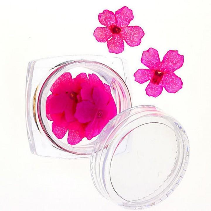 Сухоцветы для украшения и дизайна ногтей №64