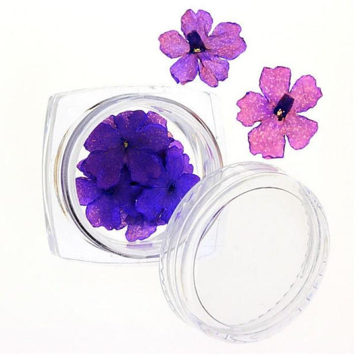 Сухоцветы для украшения и дизайна ногтей №67