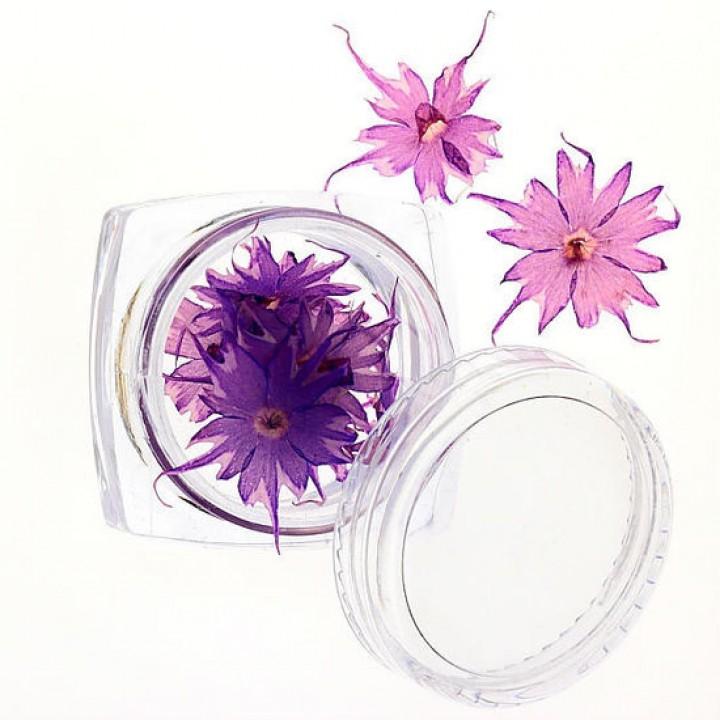 Сухоцветы для украшения и дизайна ногтей №69