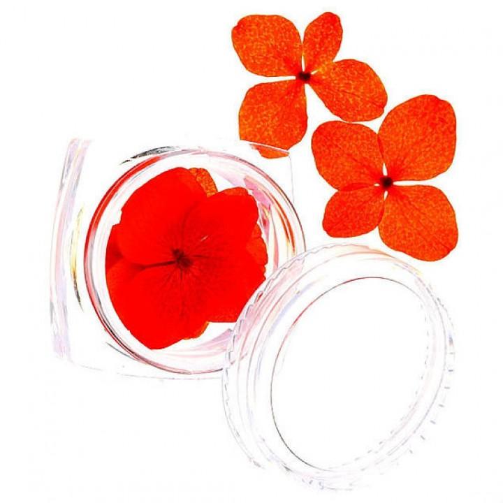 Сухоцветы для украшения и дизайна ногтей №70