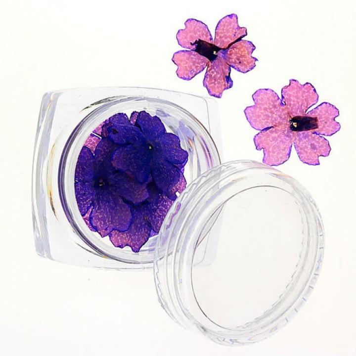 Сухоцветы для украшения и дизайна ногтей №71
