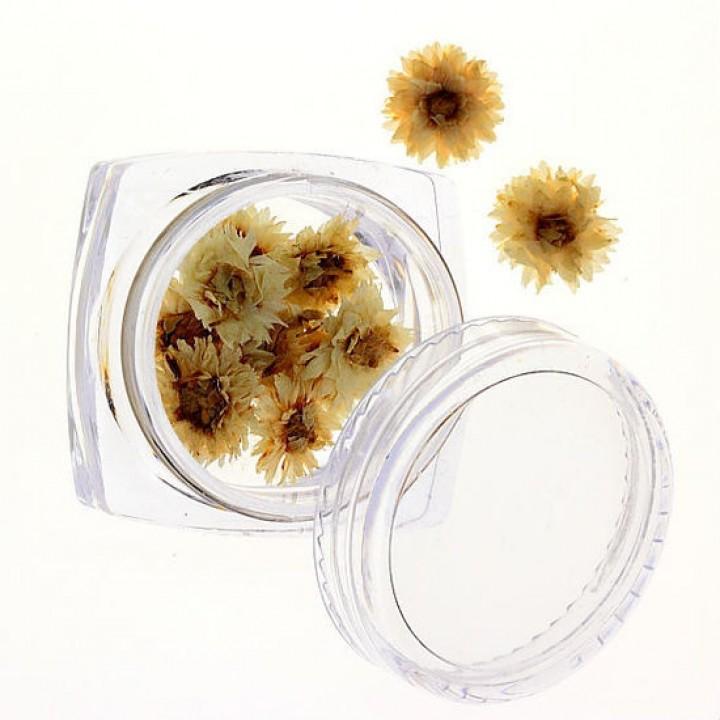 Сухоцветы для украшения и дизайна ногтей №72