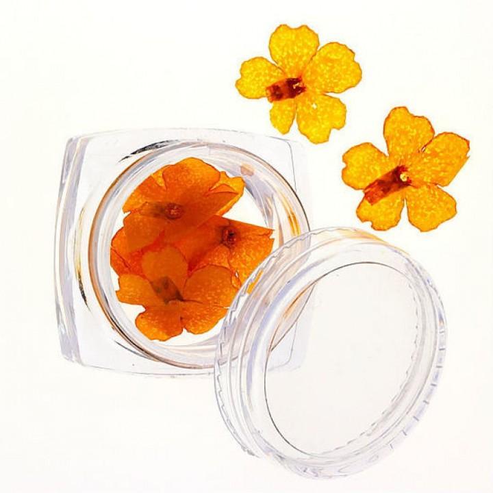 Сухоцветы для украшения и дизайна ногтей №73