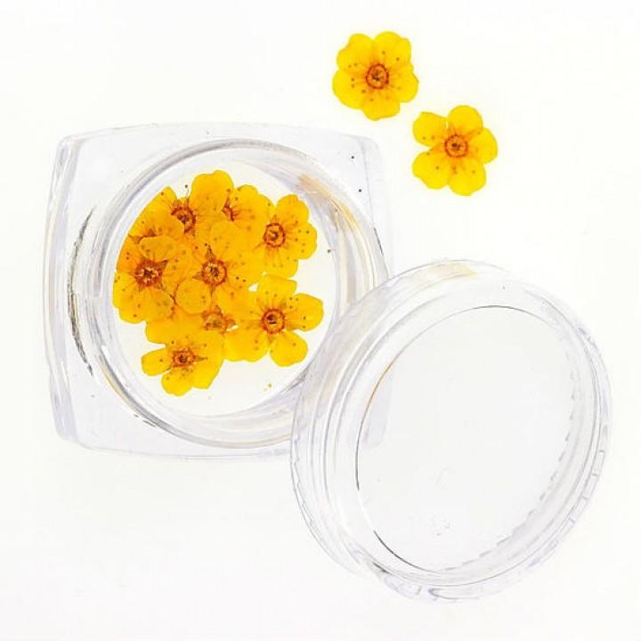 Сухоцветы для украшения и дизайна ногтей №75