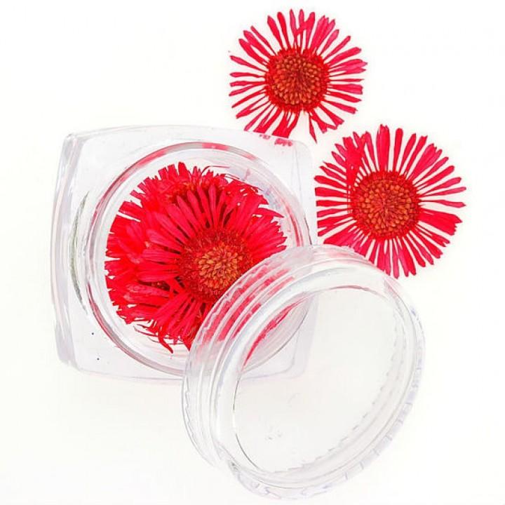 Сухоцветы для украшения и дизайна ногтей №76