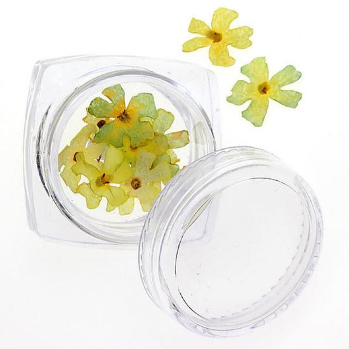 Сухоцветы для украшения и дизайна ногтей №82