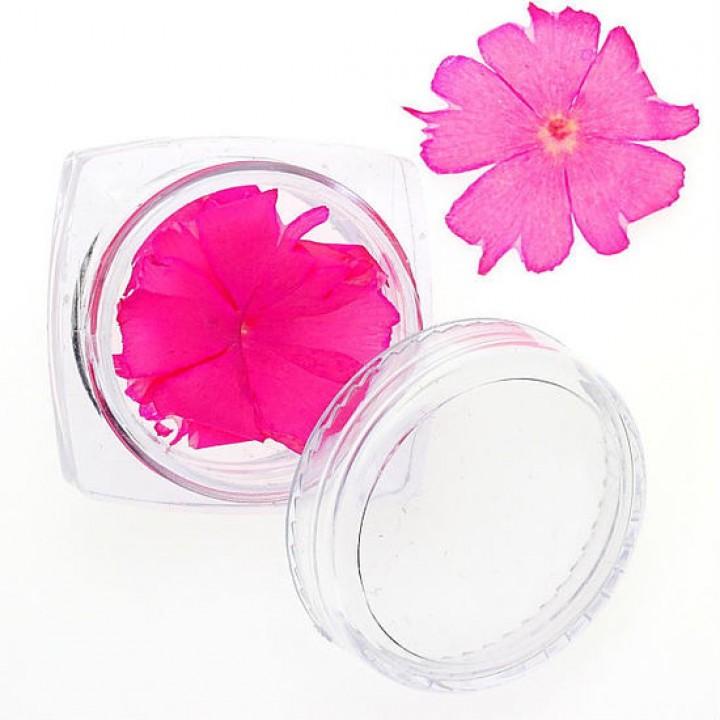 Сухоцветы для украшения и дизайна ногтей №86