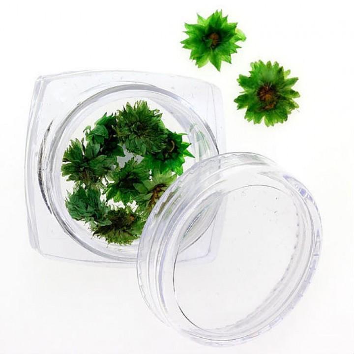 Сухоцветы для украшения и дизайна ногтей №89