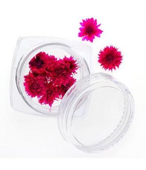 Сухоцветы для ногтей №91