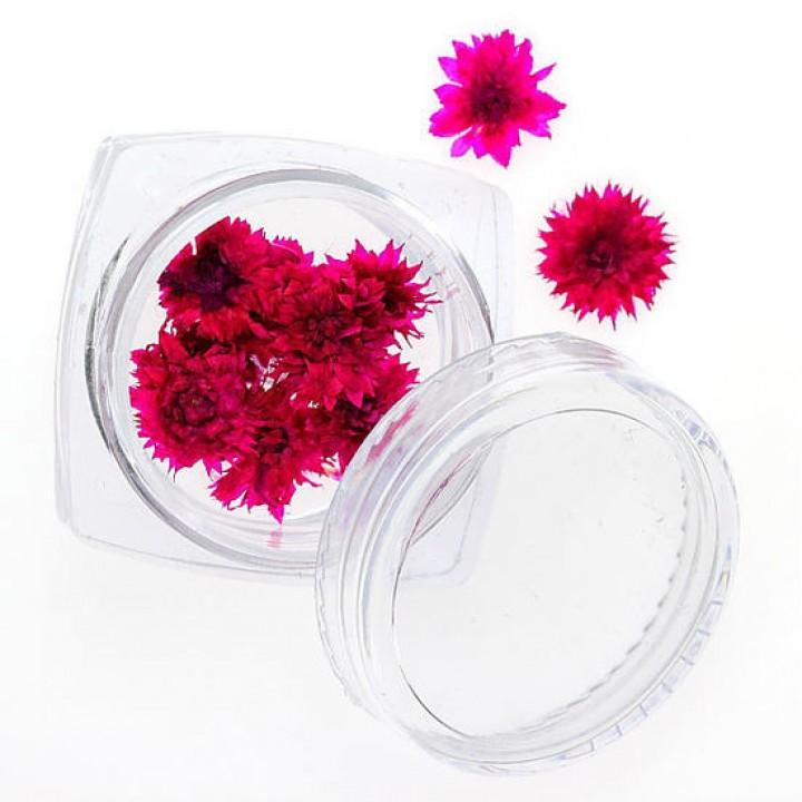 Сухоцветы для украшения и дизайна ногтей №91