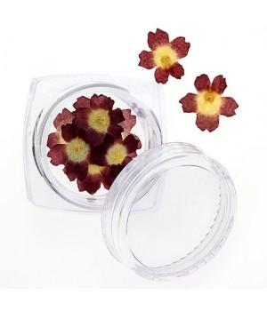 Сухоцветы для ногтей №92