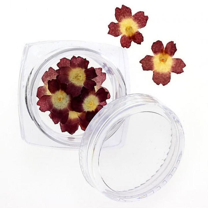 Сухоцветы для украшения и дизайна ногтей №92