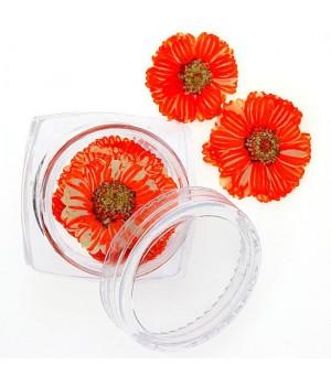 Сухоцветы для ногтей №93