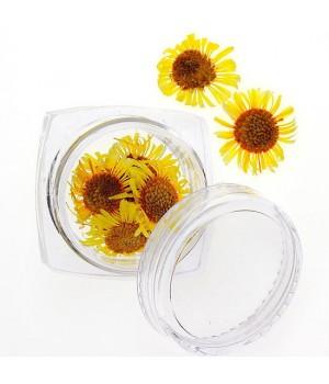 Сухоцветы для ногтей №96