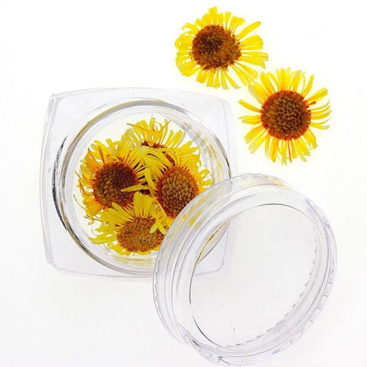 Сухоцветы для украшения и дизайна ногтей №96
